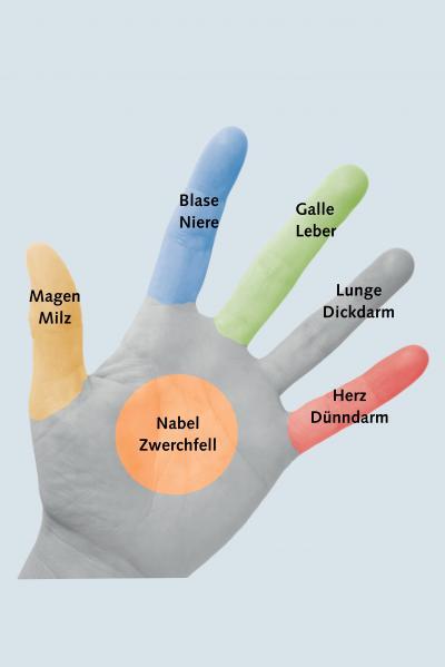 Foto von Hand mit eingefärbten Fingern und ihren Bedeutungen zu Organen